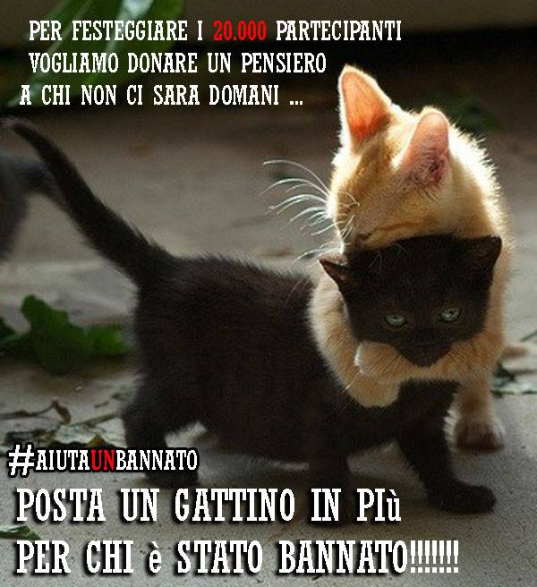 Progetto Kitten