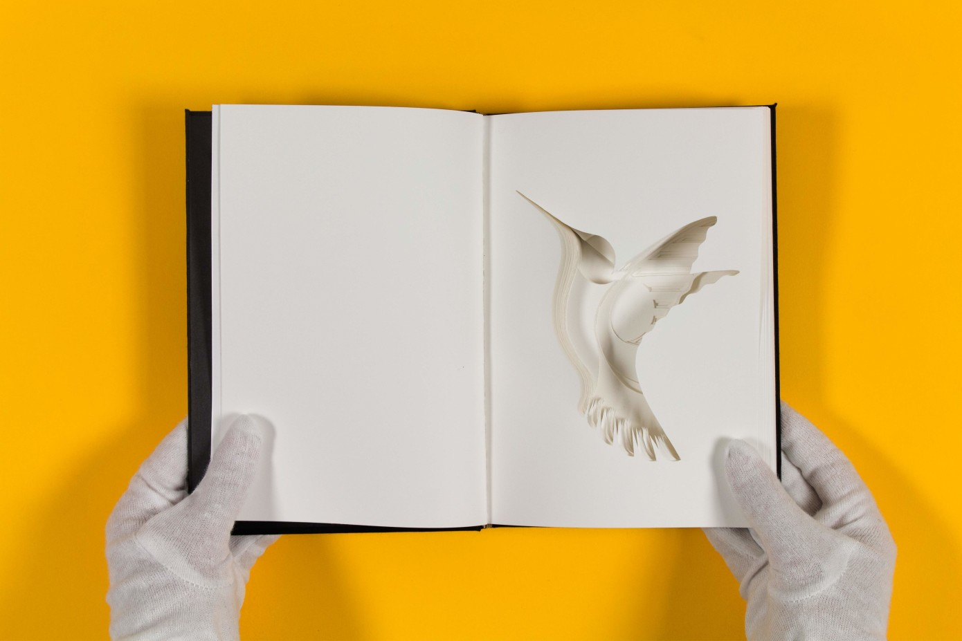 hummingbird - matteo pani